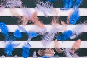 the blue feathers
