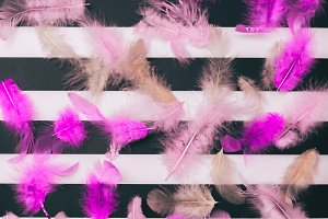 pink feathers of a bird
