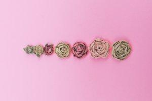 artificial roses