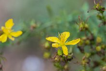 Color yellow flower