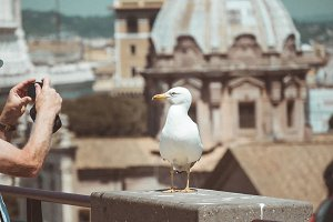 Seagull stands over the roofs in historical center of Rome