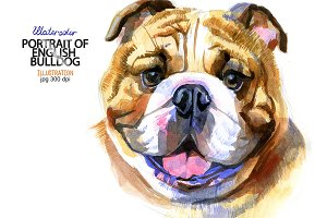 Watercolor English bulldog