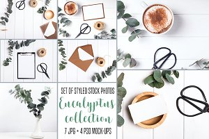 Stock photos. Eucalyptus collection