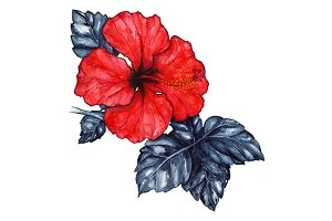Watercolor red hibiscus flower