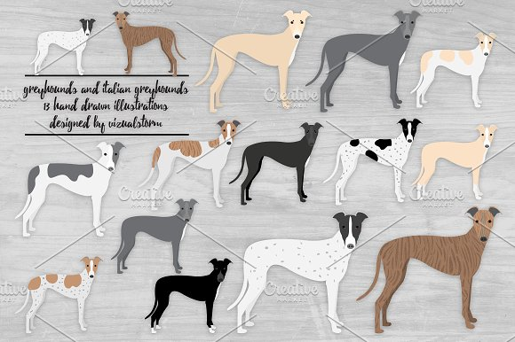 Greyhound & Italian Greyhound Dogs