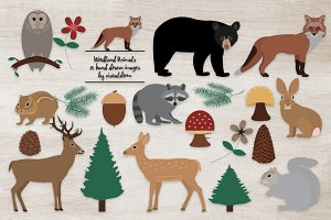 Woodland Animal Illustrations