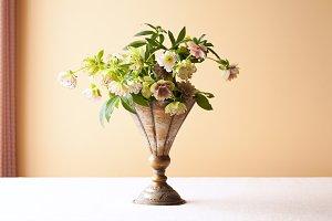 Fresh cut flowers - Hellebore