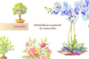 8 watercolor potted flowers
