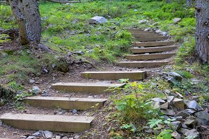wooden steps in a forest