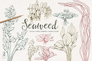 Seaweeds, hand drawn, vintage