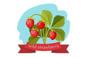Wild strawberry with green leaves isolated on white background.