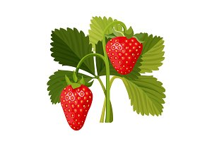 Strawberry with green leaves isolated on white background.