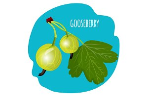 Gooseberry with green leaf on blue background. Edible fruit