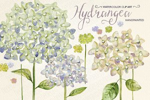 Watercolor hydrangea, hand painted