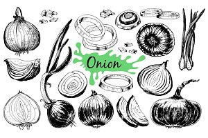 Onion hand drawn graphic set.