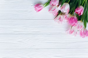 White background and pink tulips.