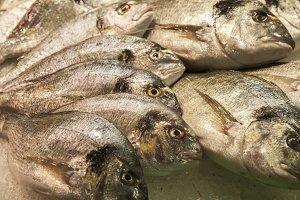 Fresh fish