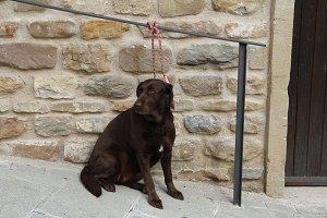 Tied dog