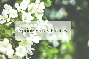 50% SALE Spring Stock Photos