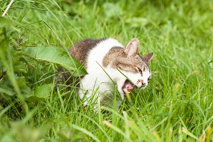 Angry cat in green grass