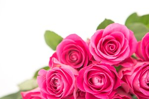 Close up of a beautiful bouquet of pink roses on a white background