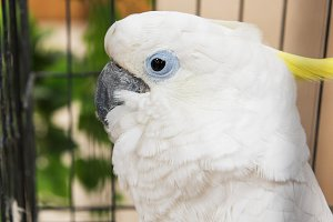 Big white parrot