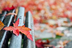 Red maple leaf on a bench
