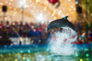 Two dolphins at dolphinarium