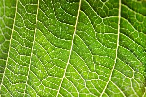 Leaf in macro frame
