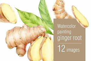 Watercolor ginger root