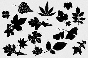 Leaves Vector Pack