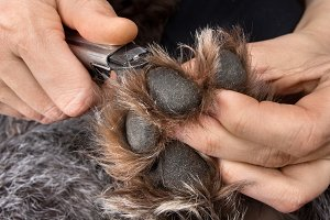 hands trimming claws of dog