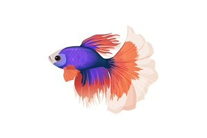 Betta small colorful, freshwater ray-finned fish realistic vector illustration