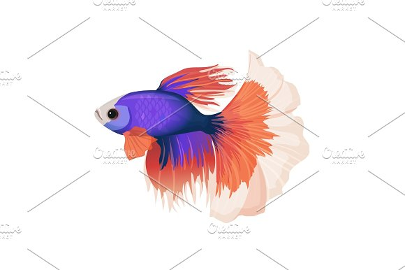 Betta Small Colorful Freshwater Ray-finned Fish Realistic Vector Illustration