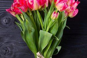 Pink tulips on black