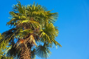 palm tree over blue sky with copy space