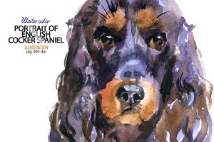 Watercolor English Cocker Spaniel
