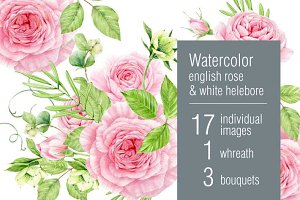 Watercolor roses & helebore