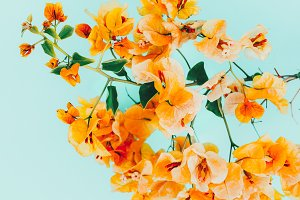 flowers. Tropical style.