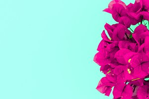 flowers. Minimal art design