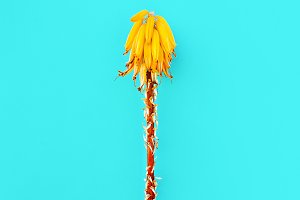 tropical flower. Creative design.