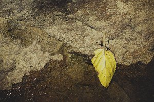 Lone Yellow Leaf on Waters Edge