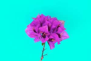 Flower. Tropics. Minimal art gallery