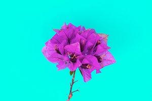 Flower. Tropics. Minimal art gallery