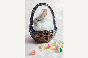 Rabbit in basket with Easter eggs