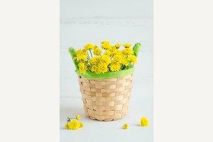 Still life Chrysanthemum yellow flowers