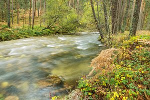 Scenic view of a river in the forest