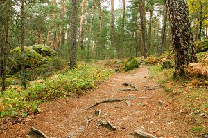 Scenic view of a forest path