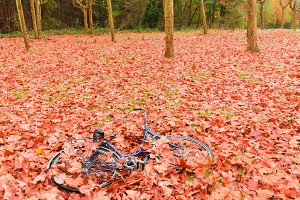 Vintage bicycle lying on dry leaves