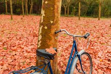 Bicycle leaning against a tree